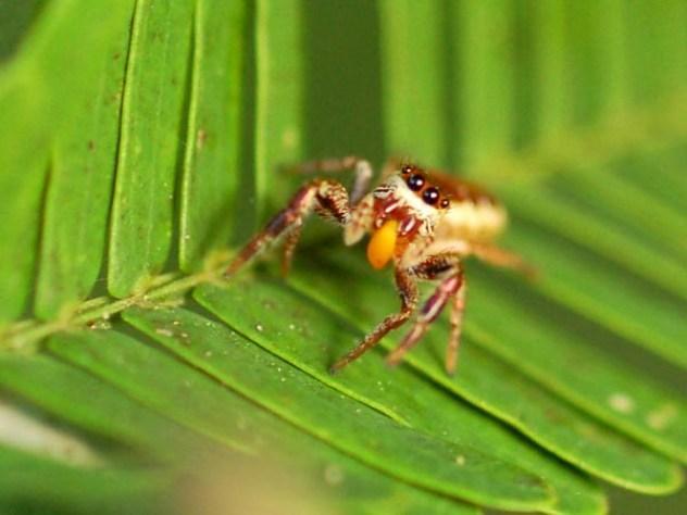 spinnen afvallen
