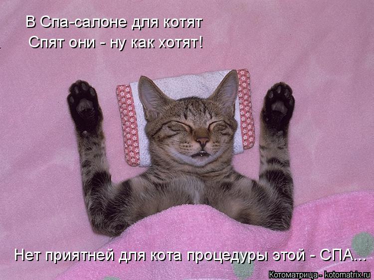 Котоматрица: В Спа-салоне для котят Спят они - ну как хотят! Нет приятней для кота процедуры этой - СПА...
