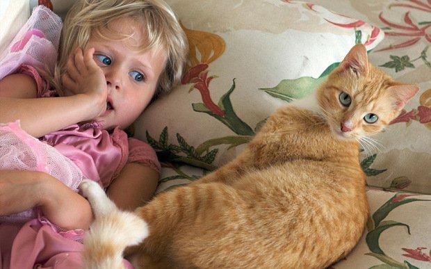 Живущий в кошках паразит делает детей глупыми