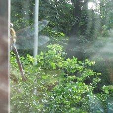 Стрекоза в утренней дымке дня.