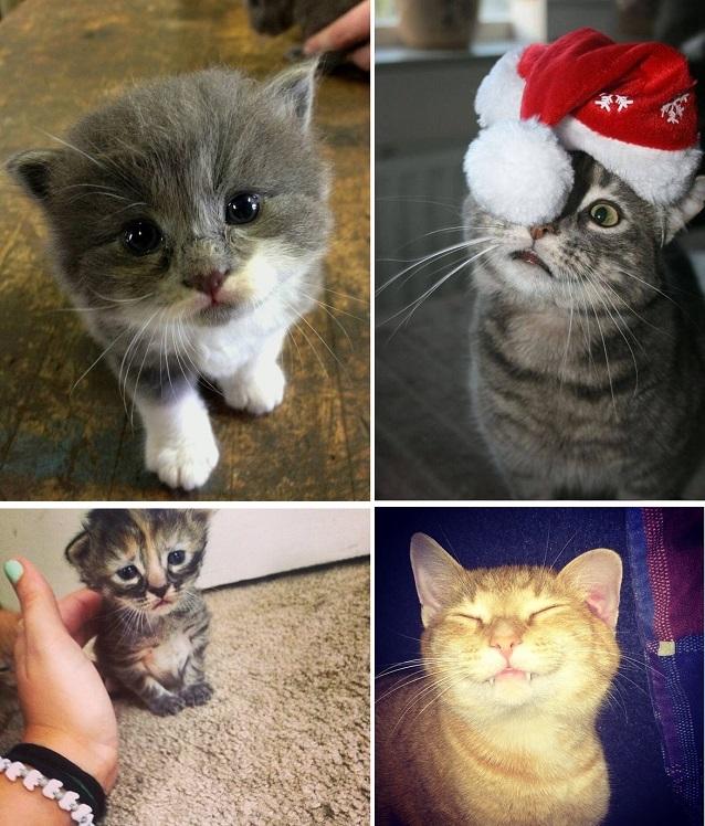 23 фотографии котиков, которые растопят ваше сердце   животные, кот, позитив, фото