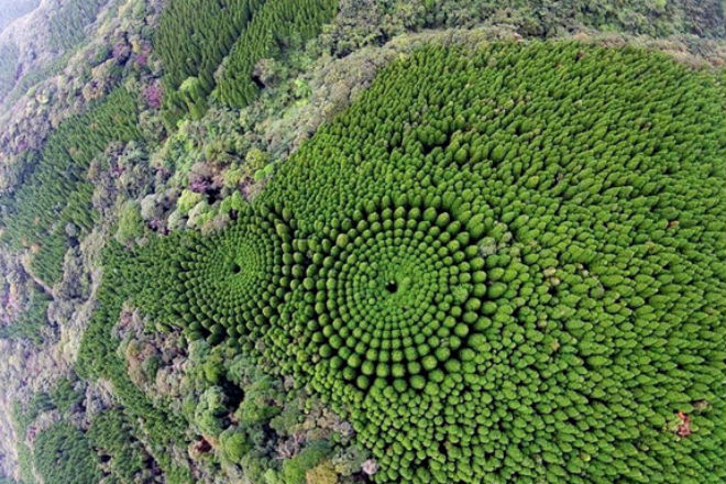 Лес кругами: экcперимент который длится полвека