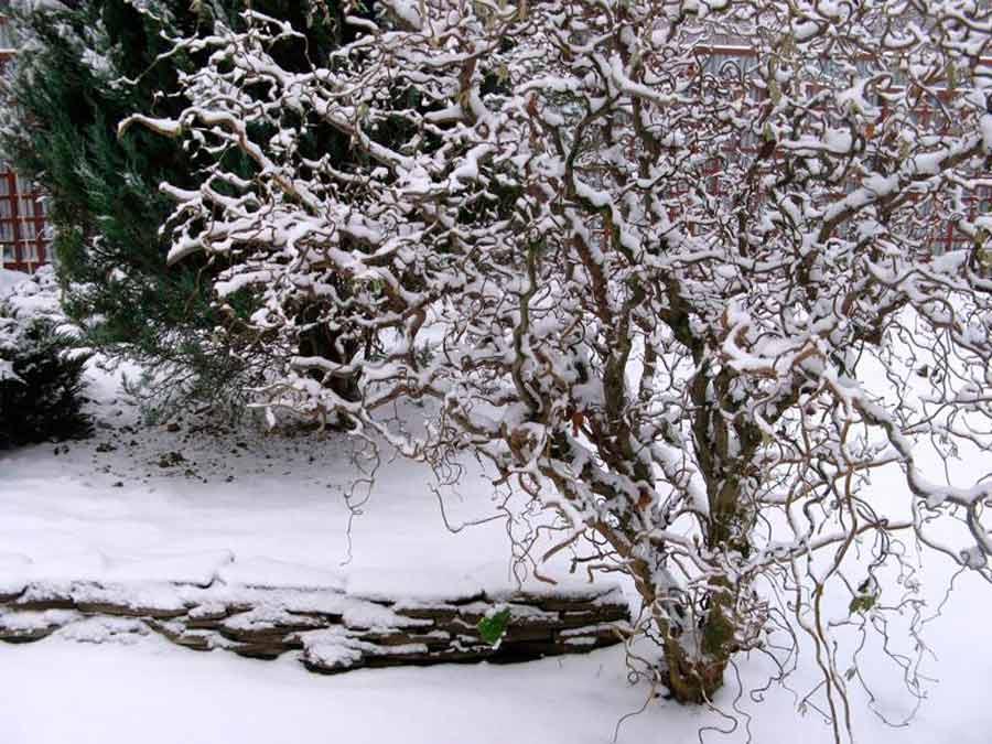 Красивый сад зимой
