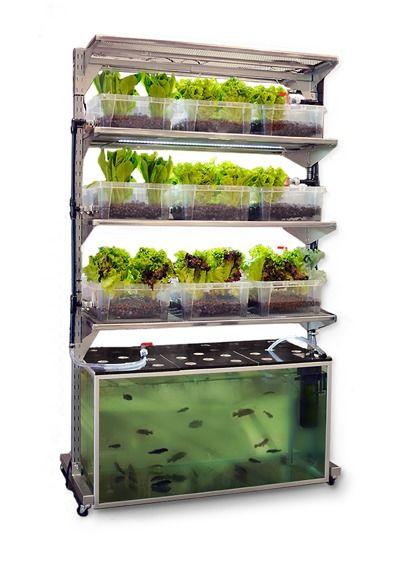 Мальтус — огород и аквариум в одном флаконе. Фото с сайта http://www.conceptualdevices.com/