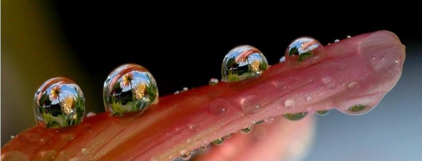 Мир в капле воды