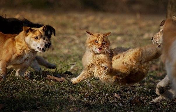"""О """"правах на свободу"""" кошек."""
