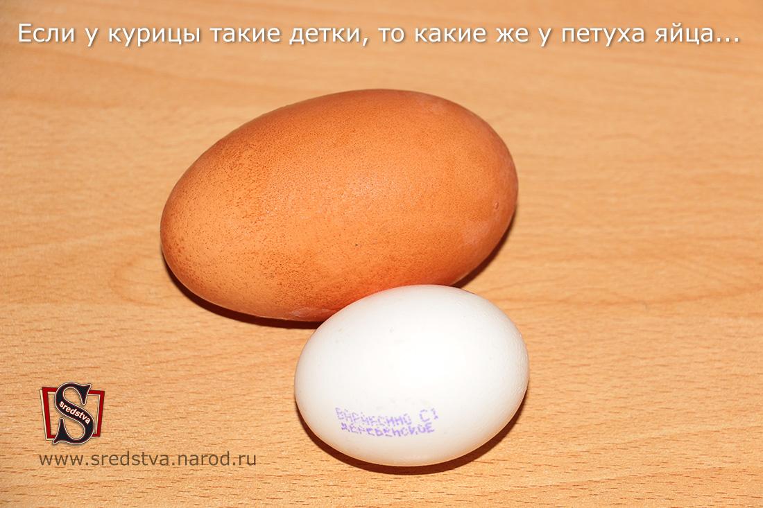 Двухжелтковые яйца это?
