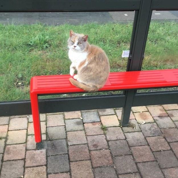 Люди создали  из автобусной остановки мемориал кошке,которая была жестоко убита...