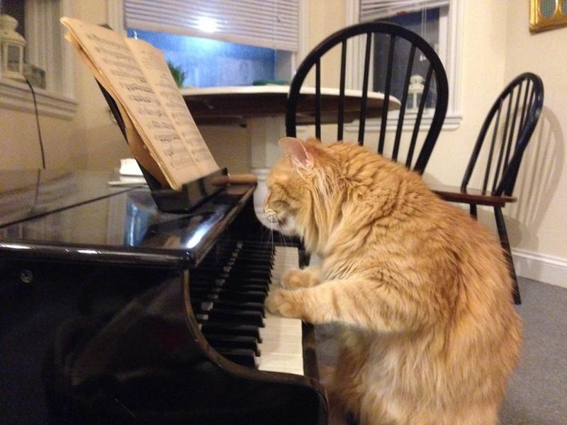 У котов можно многому поучиться