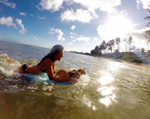 Одноглазый кот-сёрфингист рассекает гавайские волны