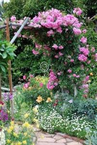 Спутники розы