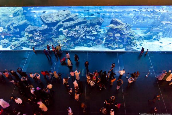 Аквариум и подводный зоопарк…