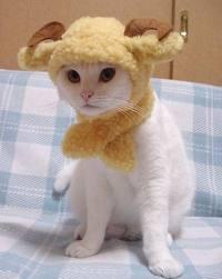 Улыбнитесь! Кошки!  (подписи-смешинки от Елены)