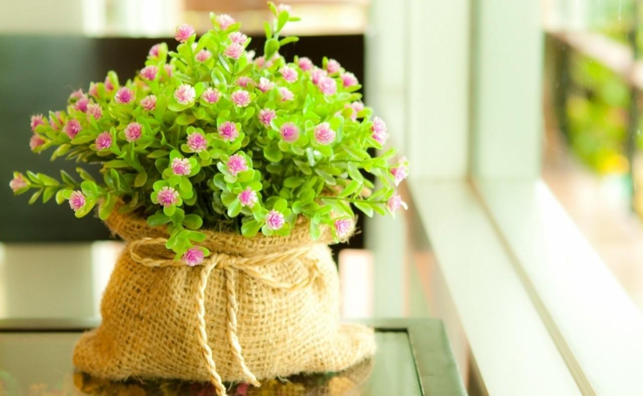 10 оригинальных идей по украшению домашних растений