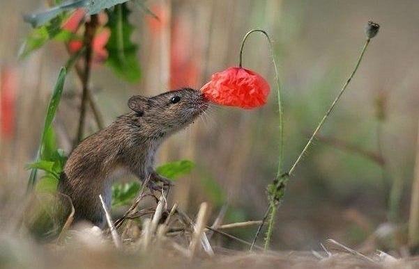 И животные могут оценить запах лета)))