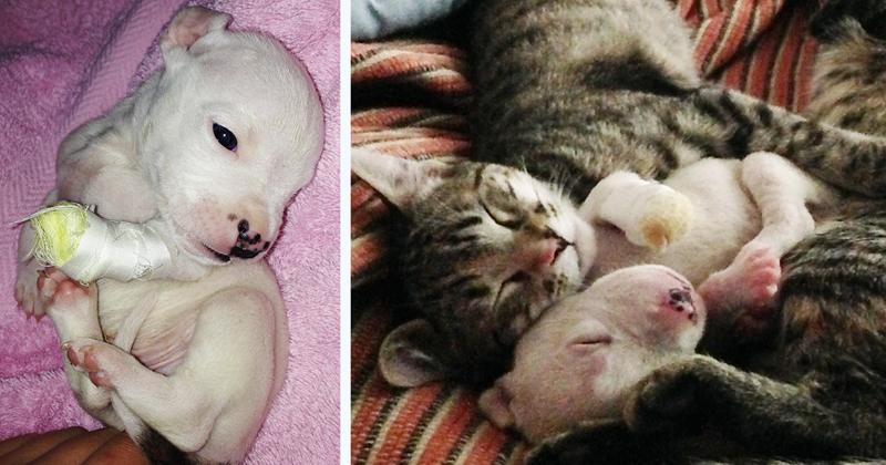 Кошки воспитывают трёхногого щенка, которого пыталась съесть его мать
