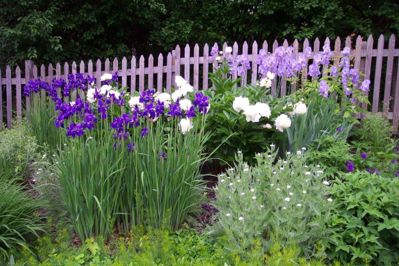 красивые клумбы ирис пион лилии желание