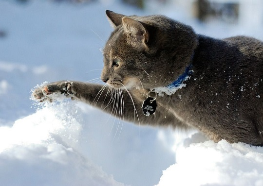 marvelous_cats_having_a_blast_in_the_snow_640_09
