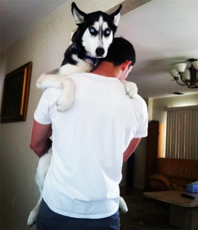 Этот симпатичный доктор иего собака хаски штурмуют интернет