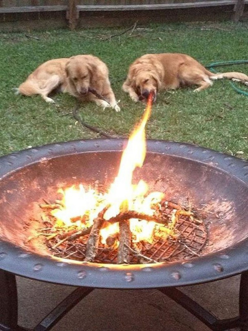 Собака-дракон. в нужный момент, прикол, юмор