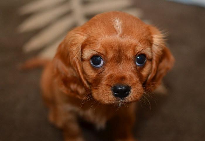 25 мимимишных щенков, которые обязательно вызовут улыбку