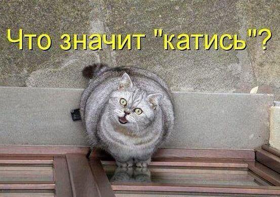 Такие милые и смешные кошки!