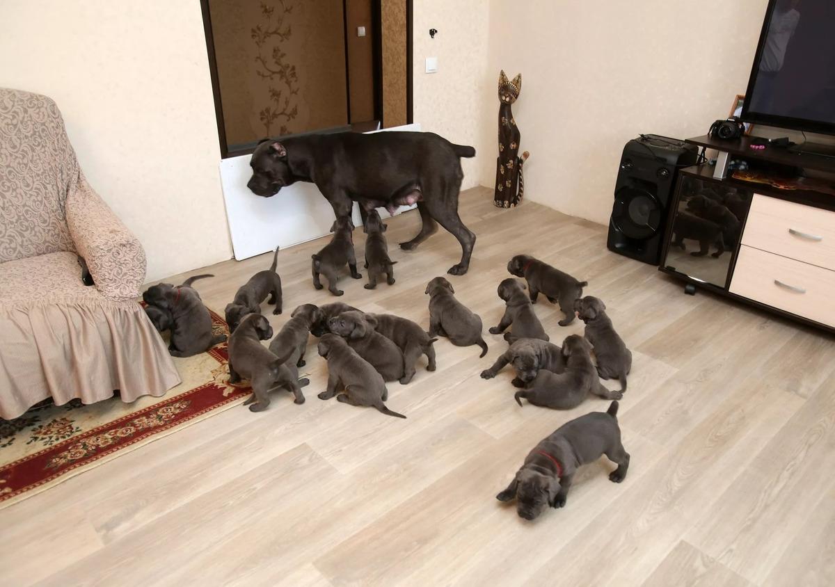 В Воронеже собака родила 19 щенков и стала матерью-героиней