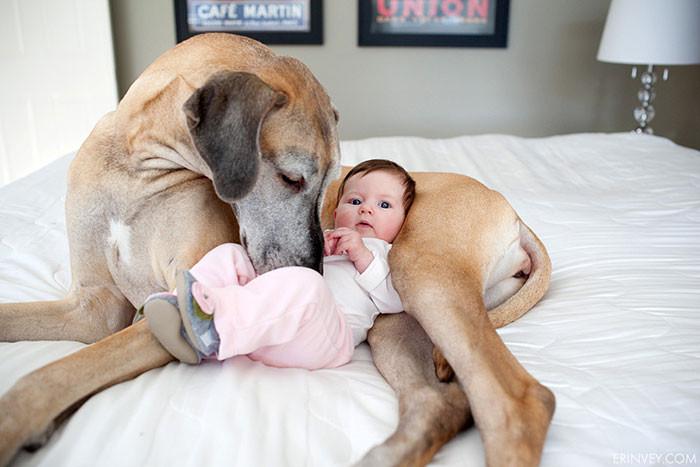 Пора спать  дружба, ребенок, собака