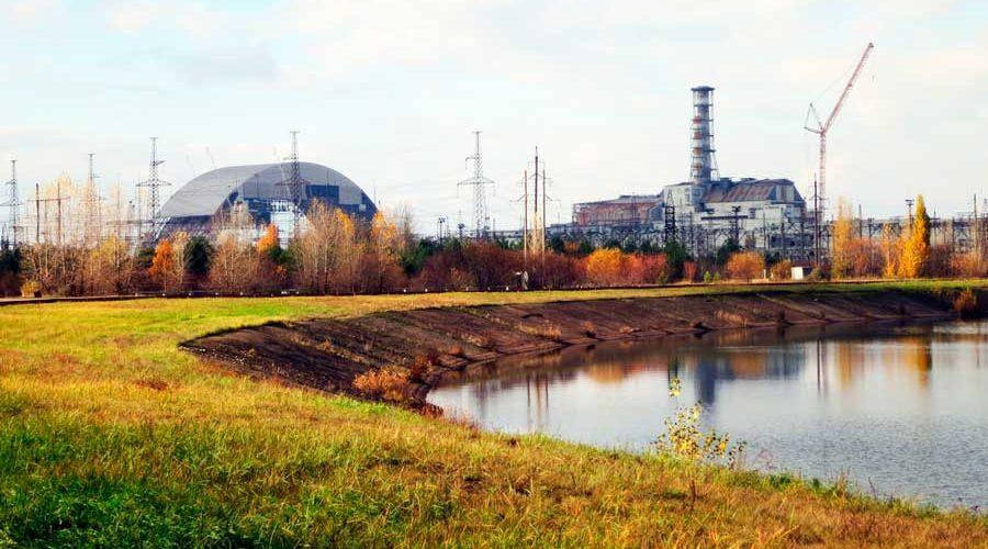 Животный мир Чернобыля — характеристика, мутации, фото и видео