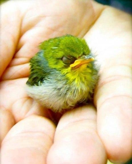 Птенец Angry Birds - он существует!