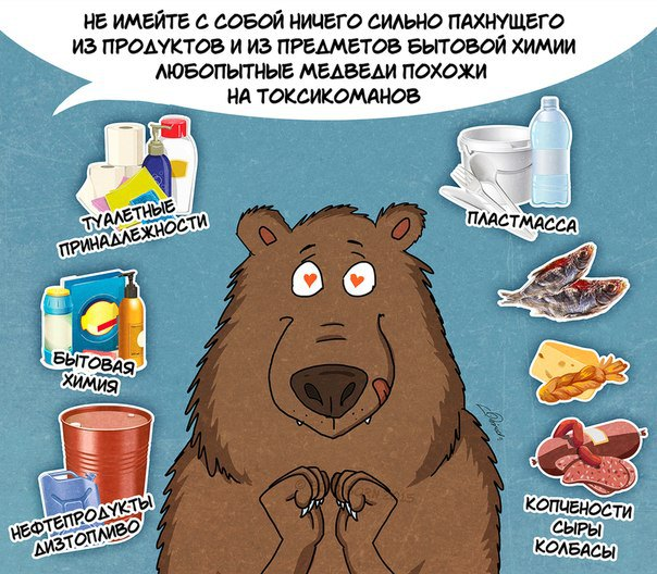10 фактов, которые надо знать о медведях
