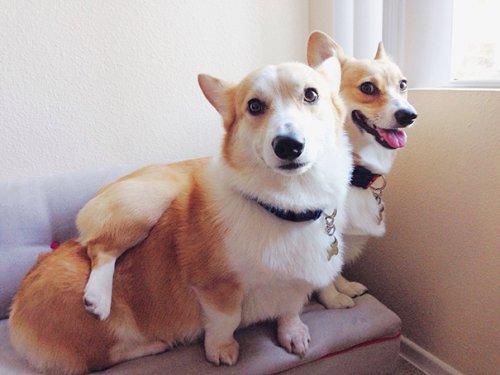 Собаки, которым плевать на в…