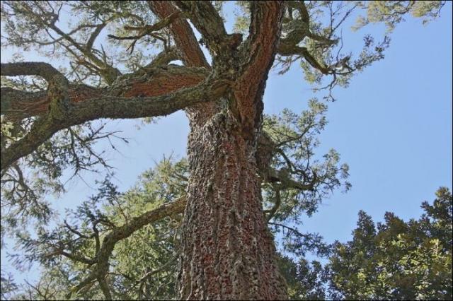 Забавные и запасливые дятлы (5 фото)