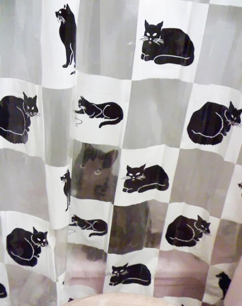 Коты-хамелеоны