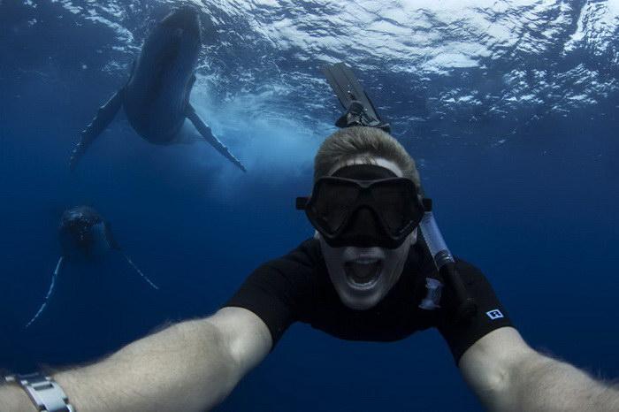 Плавание с китами в океане