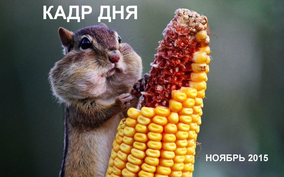 Кадр дня: Дерзкий!))