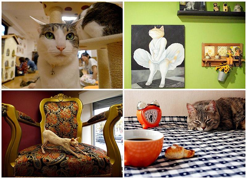 BIGPIC6 Необычные кошачьи кафе из разных стран мира