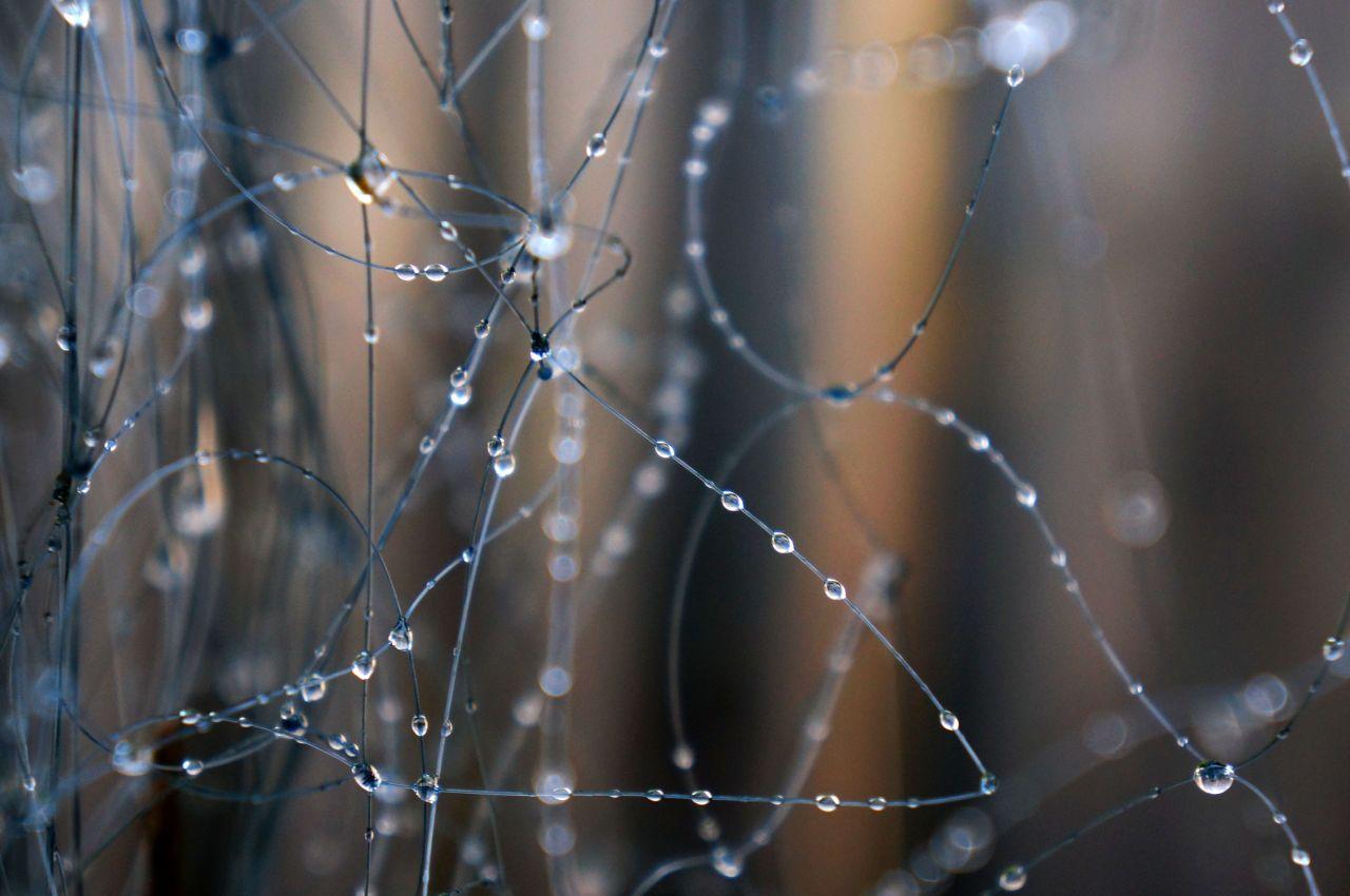 Серебряный дождь лесбиянок 10 фотография