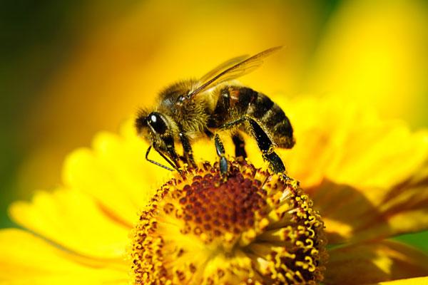 Потрясающие свойства пчелиной перги