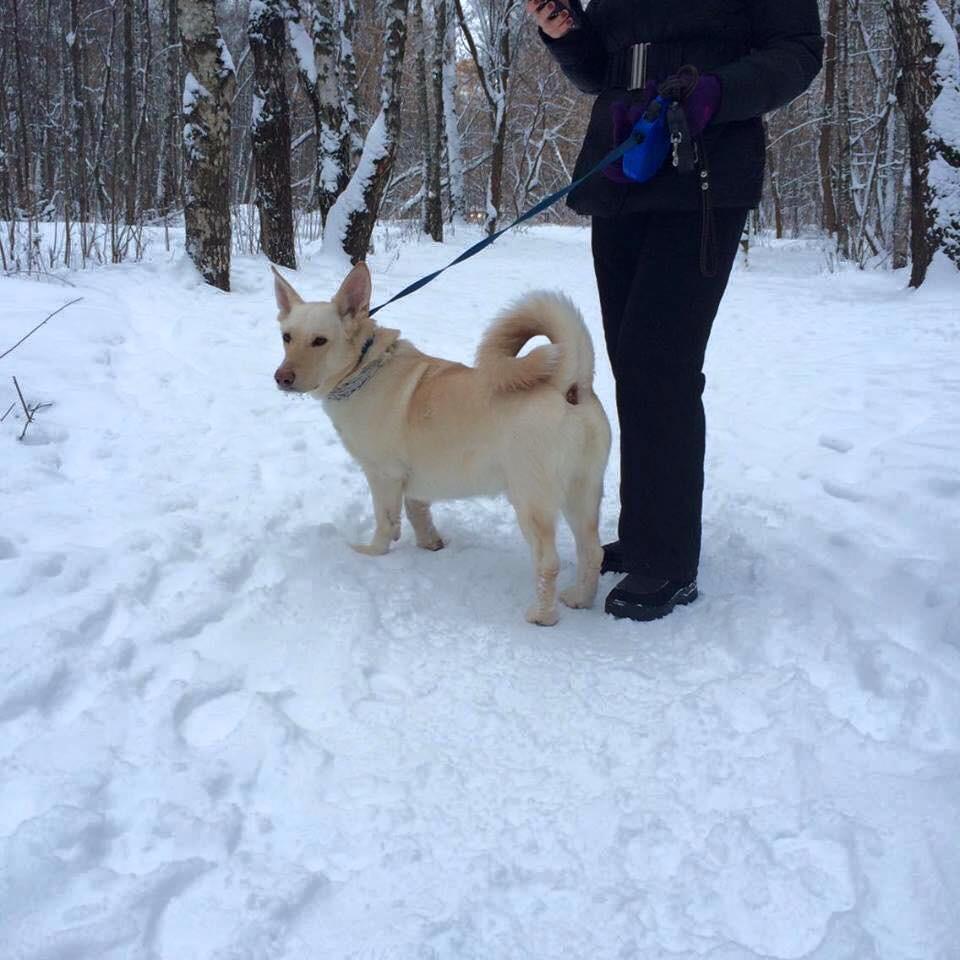 Помогите пристроить собачку, Москва