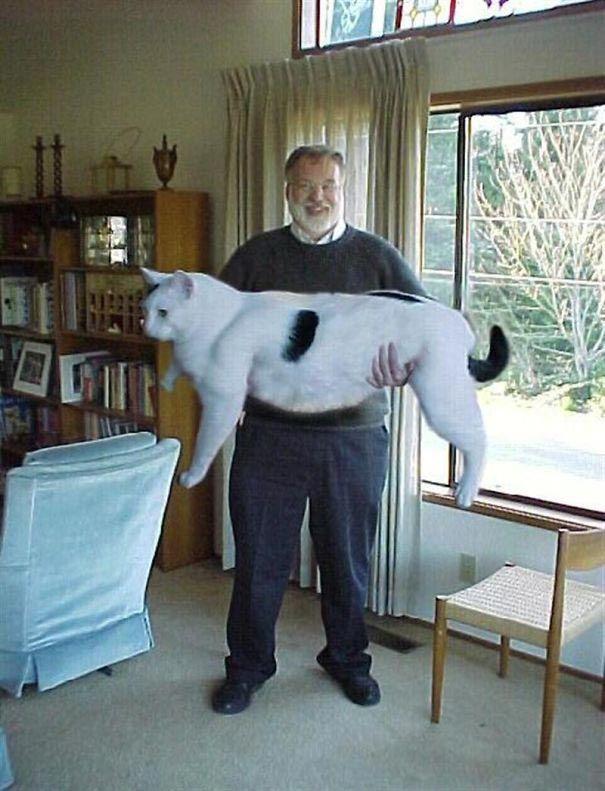 Коты-гиганты, огромные коты, гигантские коты, мейн-куны, коты саванна