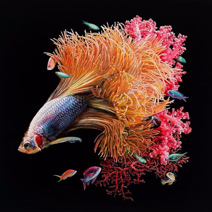 Коралловые рифы. Автор: Lisa Ericson.