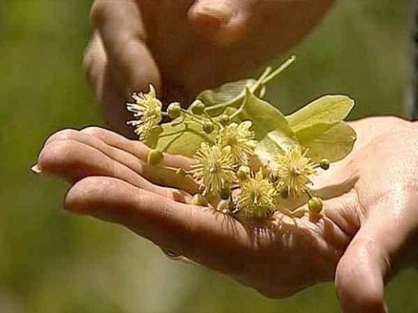 как очиститься от паразитов с семя льна