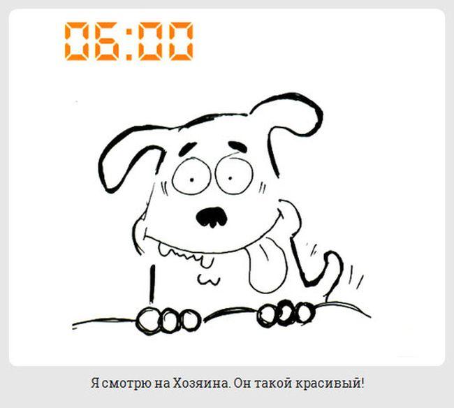 Жизнь обычной собаки