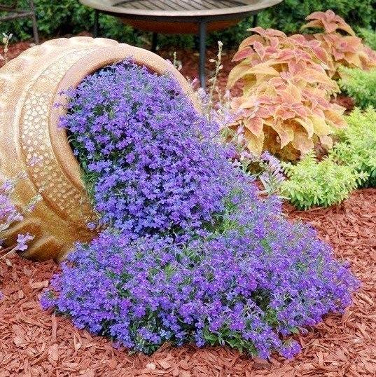 Сад из цветов своими руками фото