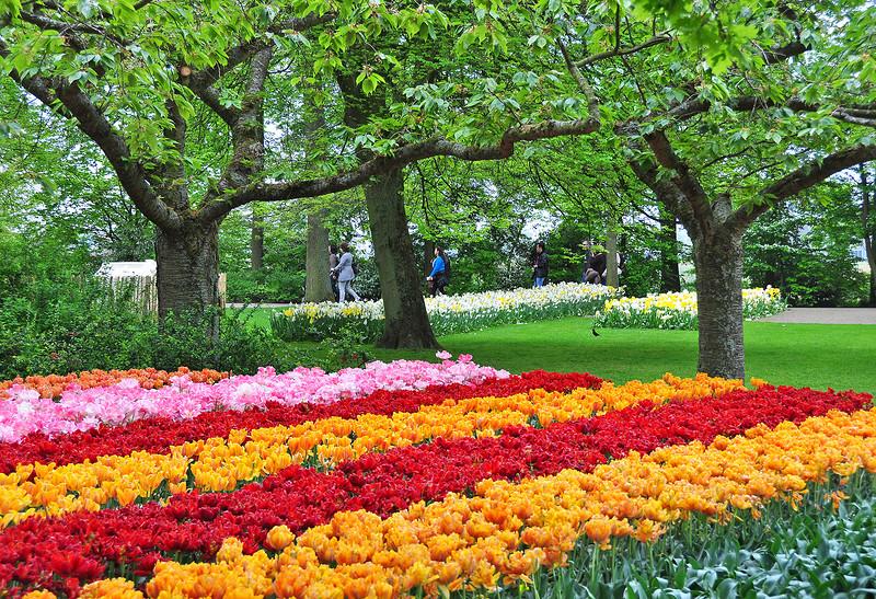 Мир оживает цветами играя
