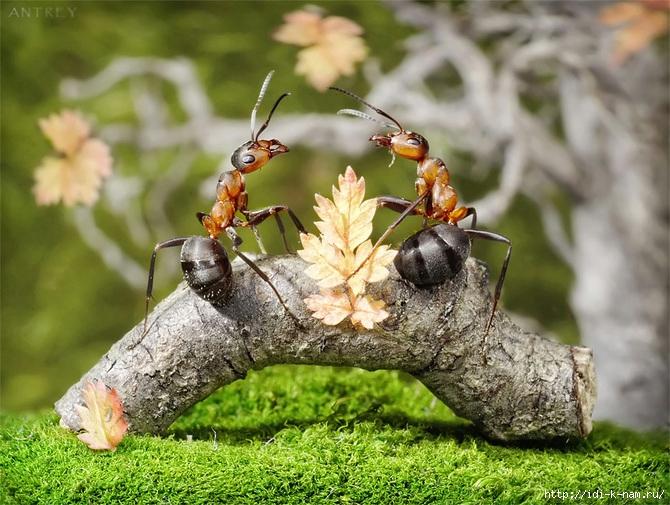 как избавиться от муравьев на даче, чем уничтожить муравьев на даче, как бороться с муравьями на даче, борьба с муравьями на даче. уничтожение муравьев на даче Хьюго Пьюго,
