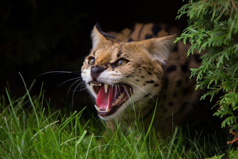 Несколько фото из серии «лучшие фотографии животных — 2015»