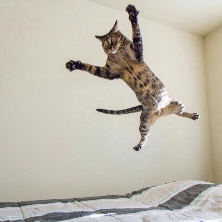 21 причина, почему мы не можем перестать любить кошек кошки, любовь