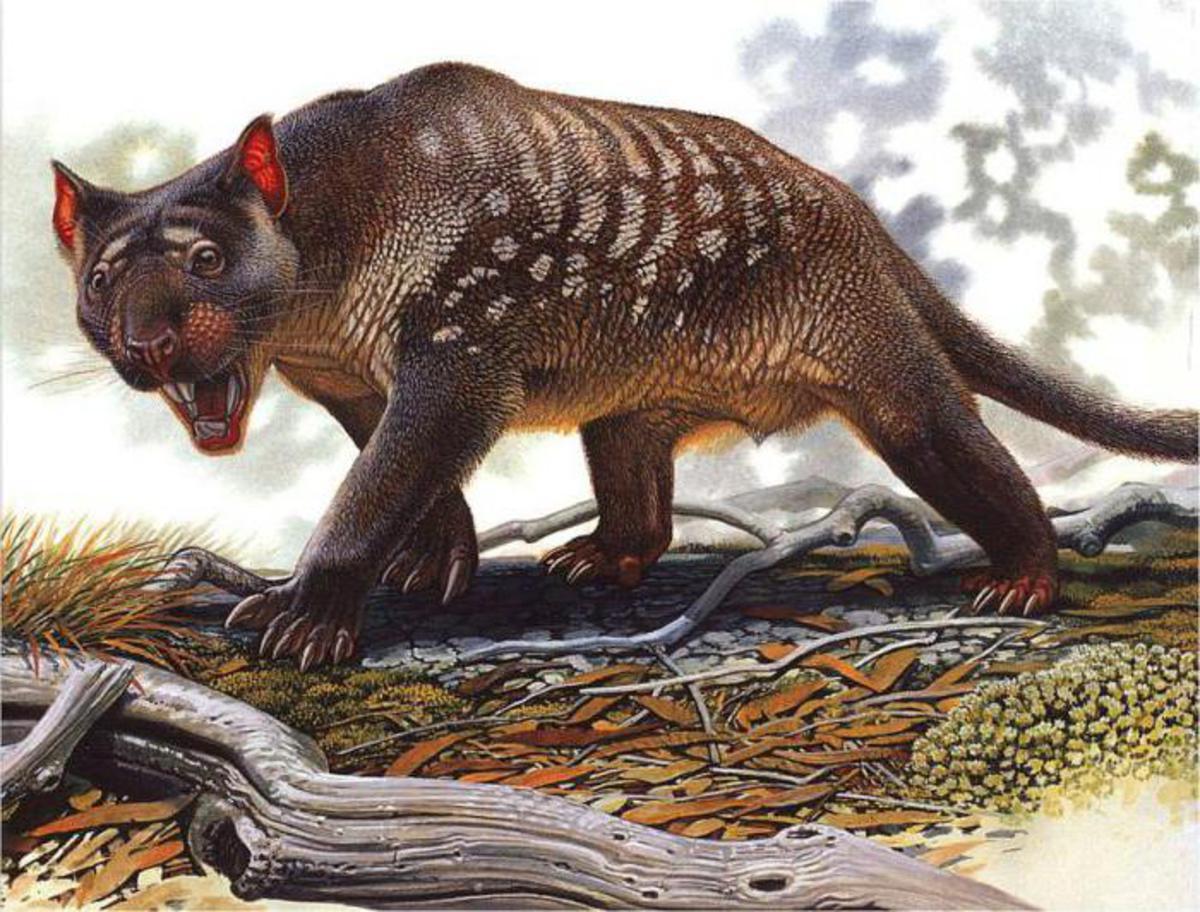 Как выглядели львы миллион лет назад